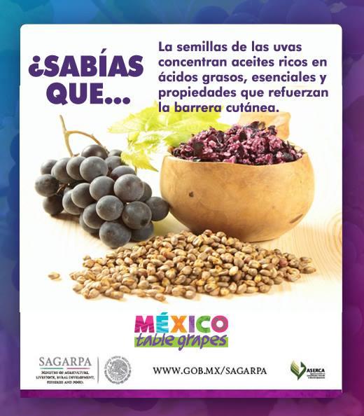 Beneficios Del Aceite De Semillas De Uvas Mexico Table Grapes Aalpum